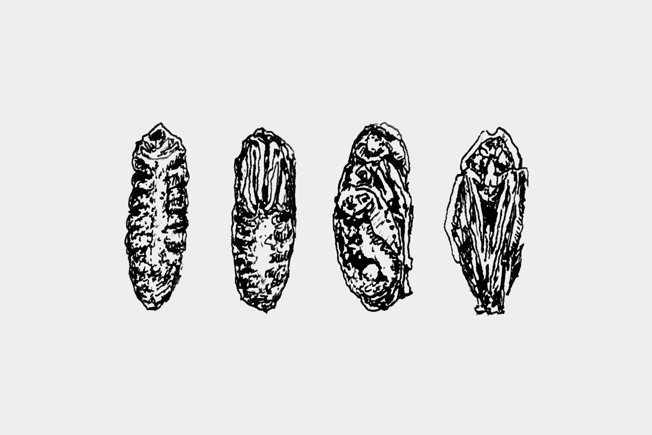 """Federzeichnungen von Insekten, gezeichnet von Christian Thanhäuser als Illustration für die 10-bändige Buchserie """"Erinnerungen eines Insektenforschers"""" von Jean-Henri Fabre für den Verlag Matthes & Seitz Berlin"""