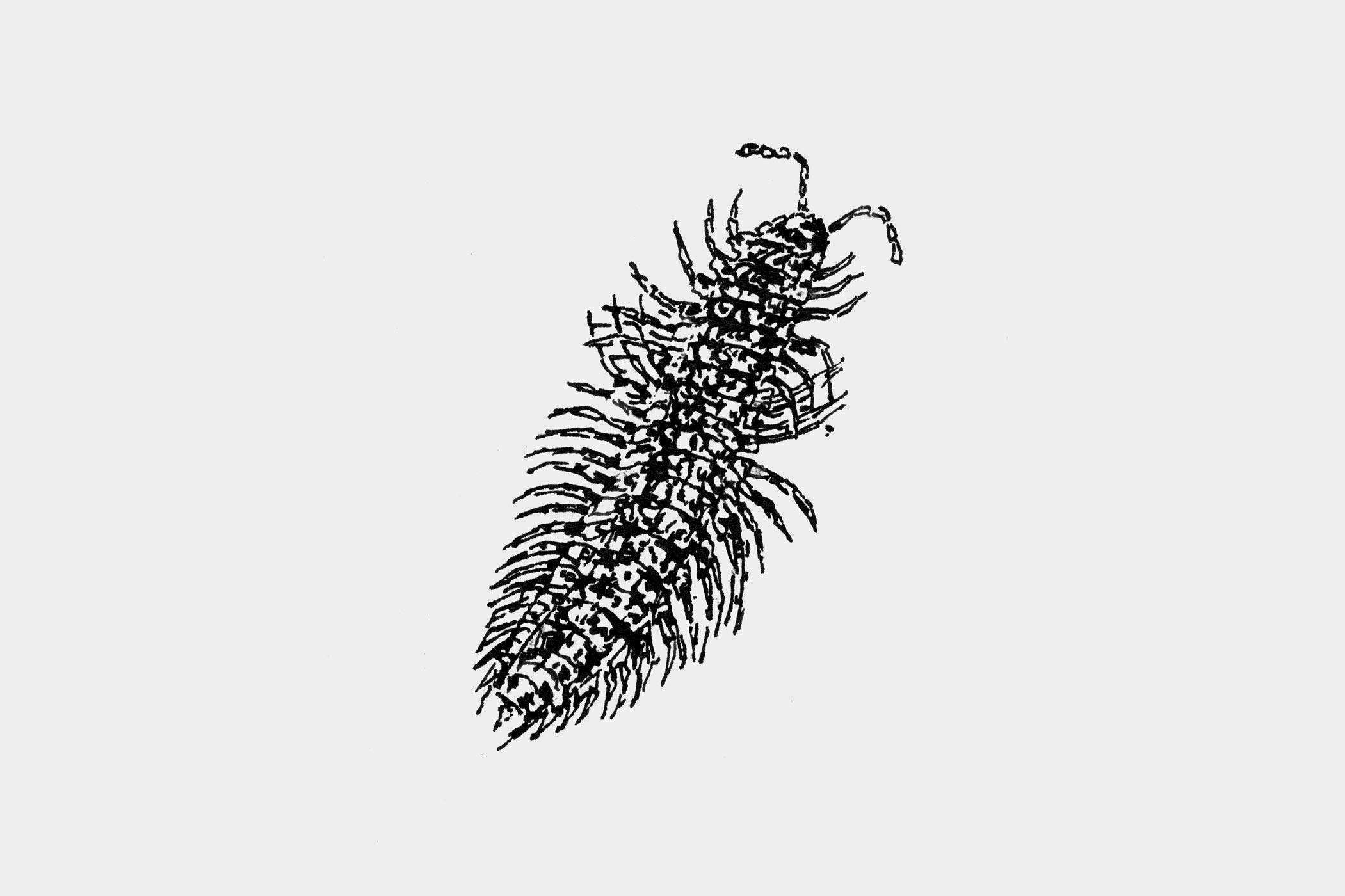"""Federzeichnungen eines Insekts, gezeichnet von Christian Thanhäuser als Illustration für die 10-bändige Buchserie """"Erinnerungen eines Insektenforschers"""" von Jean-Henri Fabre für den Verlag Matthes & Seitz Berlin"""